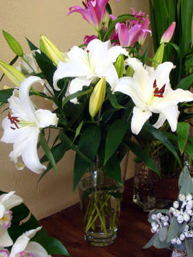 Oriental lilies, long-lasting, fragrant classic flower, very popular.