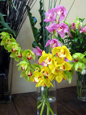 Cymbidium orchids, gorgeous flowers for that home/office display.