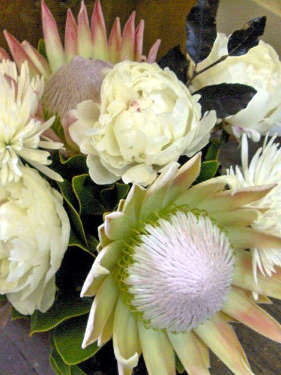 Peony Roses, wonderfully fragrant and such a short season and King Proteas.